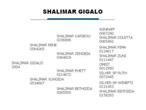 Shalimar Gigalo