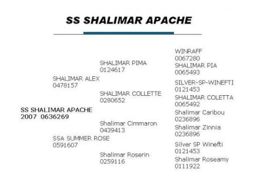 SS Shalimar Apache