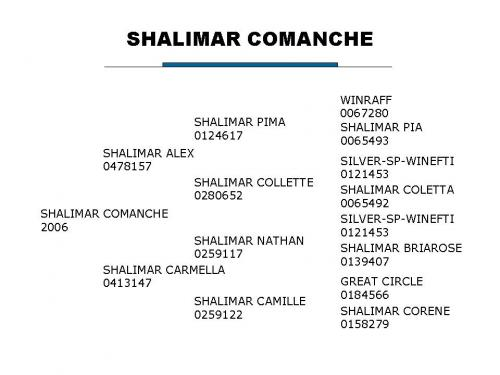 Shalimar Comanche